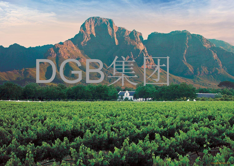DGB酒业(DGB)