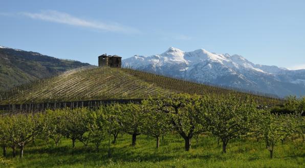 克雷特斯 来自阿尔卑斯山的葡萄酒
